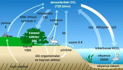 ekosistem4